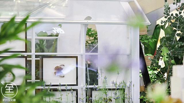 出片率100%!春日仙境空降!1000+蝴蝶现场放飞!玻璃花房,萌宠婚礼…周末锁定!(图25)