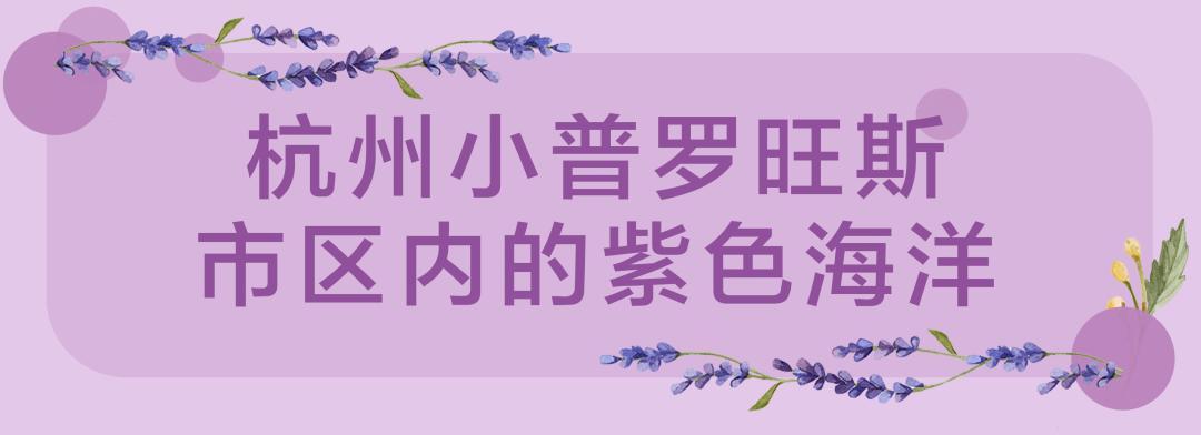 杭州の小普罗旺斯,隐藏在市区里的2000㎡超大紫色花海!小长假必去的打卡圣地!(图8)